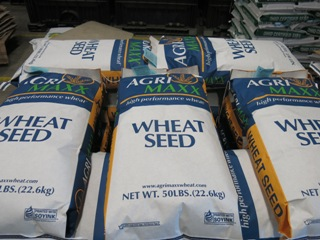 AgriMAXX Wheat Seed